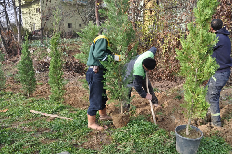 Ağaç Dikimi Çalışmaları