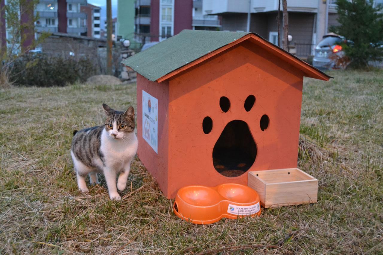 Karabük Belediyesi'nden Sokak Kedileri İçin Kedi Evleri