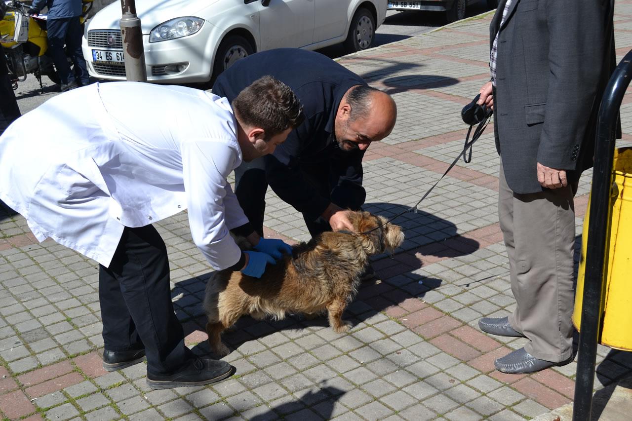 Karabük Belediyesinden Sahipli ve Sahipsiz Kedi ve Köpeklere Ücretsiz Kuduz Aşısı