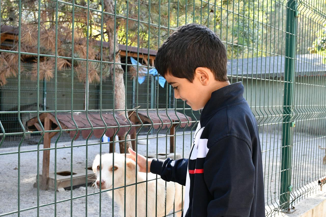 Başkan Vergili'den 4 Ekim Hayvanları Koruma Günü Mesajı