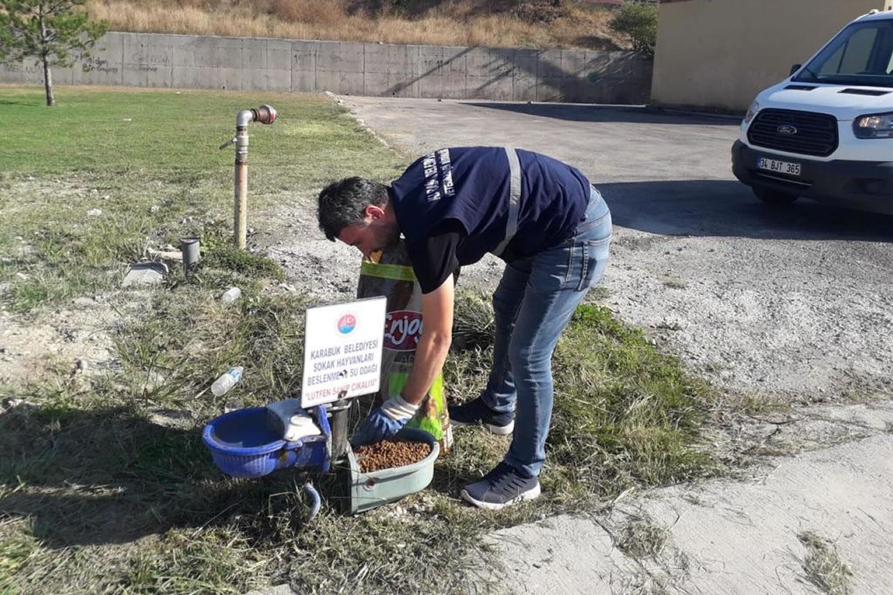 Karabük Belediyesi Sokak Hayvanlarını 4 Ekim Hayvanları Koruma Gününde de Unutmadı