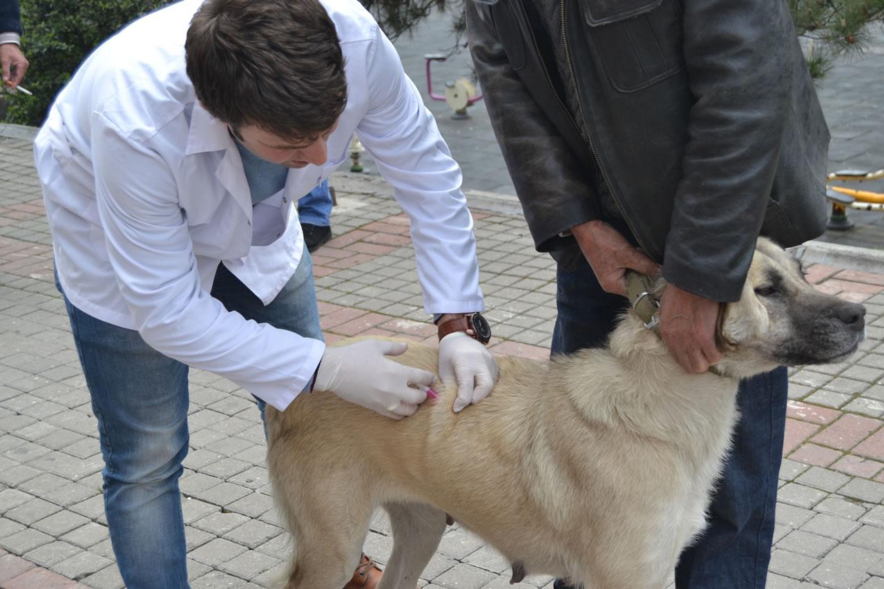 Karabük'te Köpek ve Kedilere Ücretsiz Kuduz Aşısı