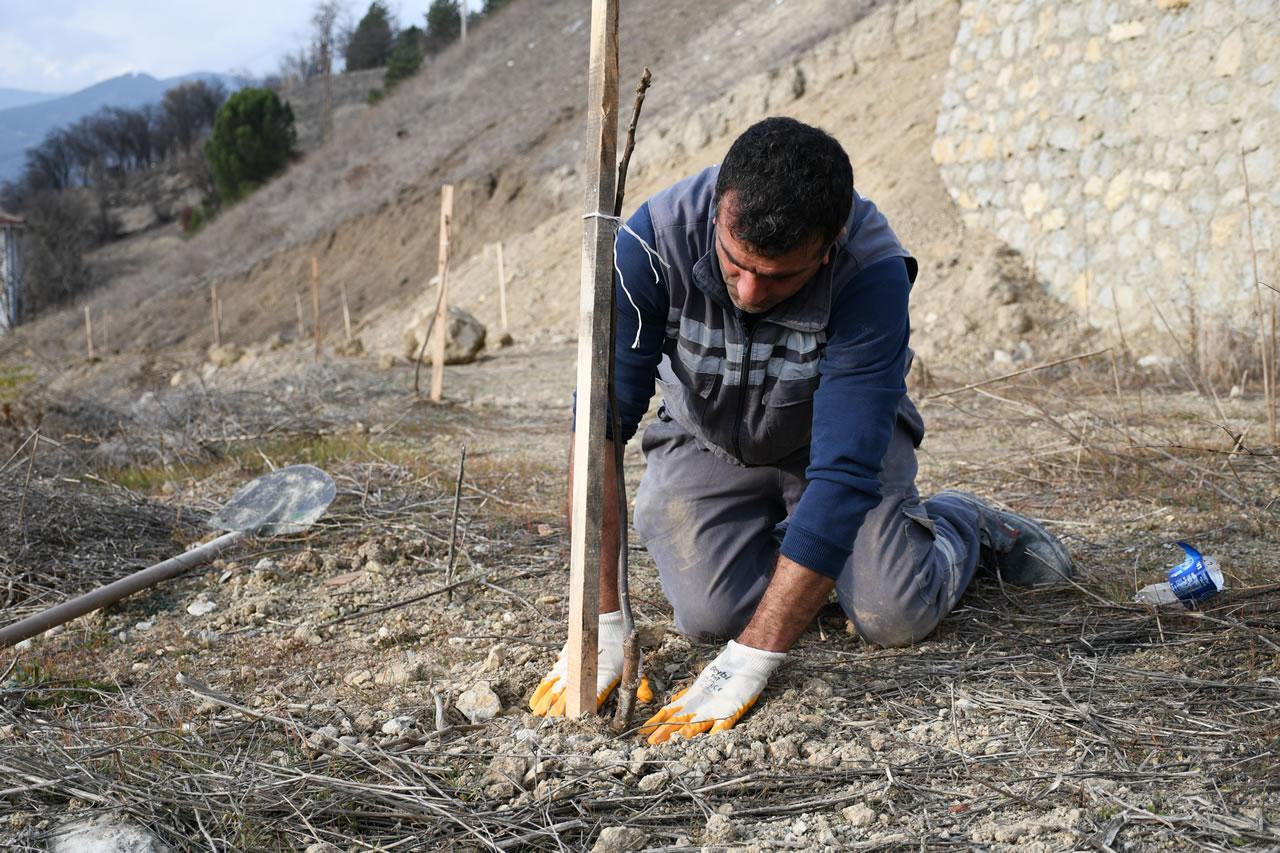 Binlerce Ceviz Fidanı Toprakla Buluştu
